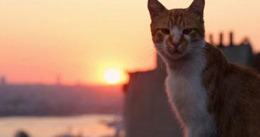 Kedi – La città dei gatti [Nuove repliche]